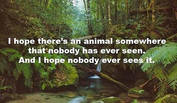 mystery-animal